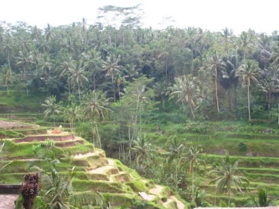 เตกัลลาลัง , อินโดนีเซีย: Tegalalang - on the way up to Penelokan