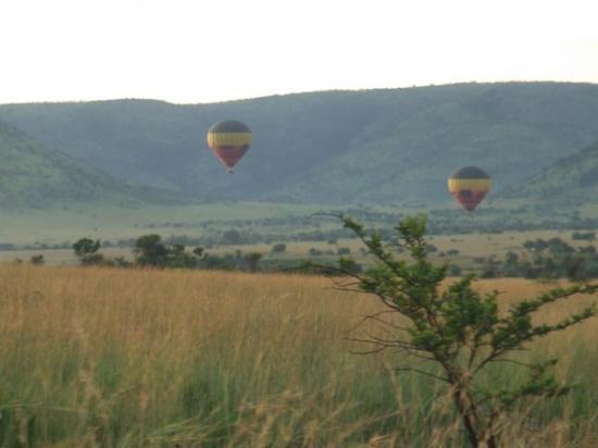 Pilanesberg National Park, แอฟริกาใต้: morning hot air ballooning over safari park