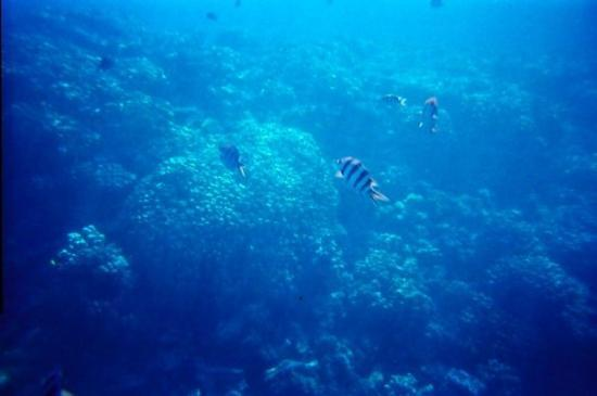 Dive Point Red Sea ภาพถ่าย
