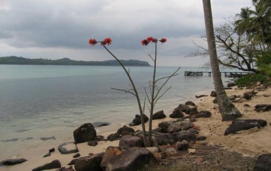 เมืองตราด, ไทย: Unknown tree/plant on Kood island