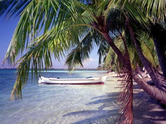 In 1997, 2 buddies and I had been in Utila Honduras for a couple of days. We were snorkeling and