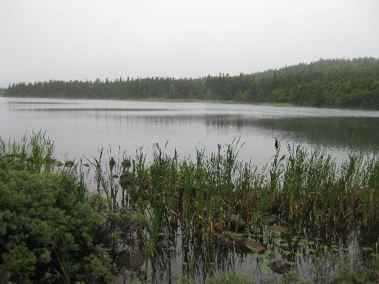 Memorial University of Newfoundland Botanical Garden: Lake in the Municipal Gardens property