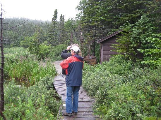 Memorial University of Newfoundland Botanical Garden: Bird watching near the lake