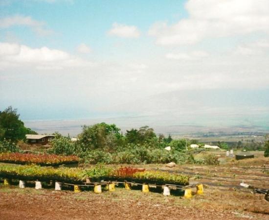 LocationPhotoDirectLink G29220 I20628341 Maui Hawaii