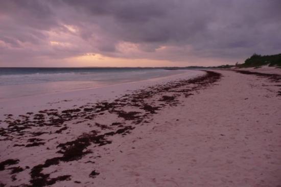 Pink sands beach harbour island photo de eleuthera for Pink sands beach in harbour islands