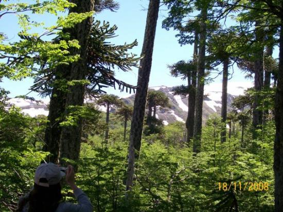 วิลลาร์ริกา, ชิลี: En el parque nacional Villarrica.