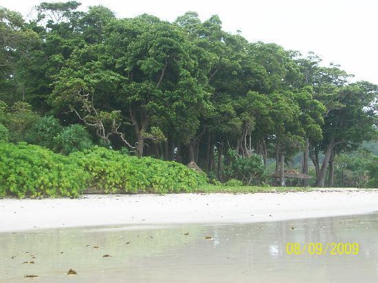 Radhanagar Beach: the forest the sand da BEACH
