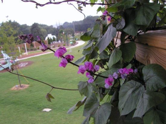 Zdjęcie Huntsville Botanical Garden