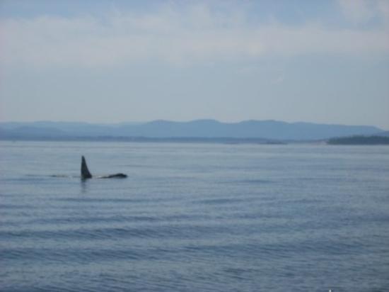 ไฟรเดย์ฮาร์เบอร์, วอชิงตัน: Orca