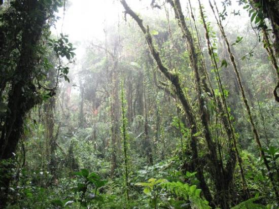 inside the Santa Elena cloud forest near Monteverde