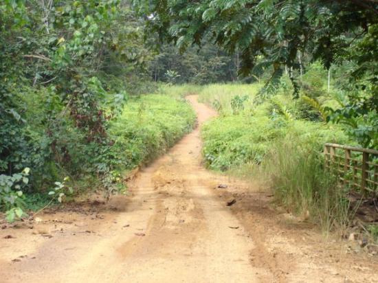 Oyem, Gabon: Sur la route du Cameroun à travers les Monts de Cristal.