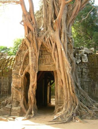 Siem Reap, Kambodscha: A hole in the tree, quite coll inside though