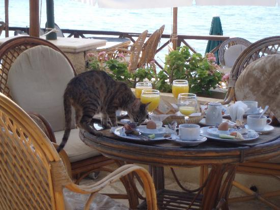 Bogaz Hotel: Cats at breakfast