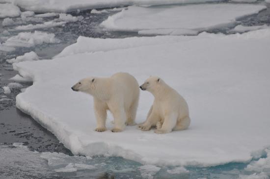 Svalbard, Noruega: AAH!