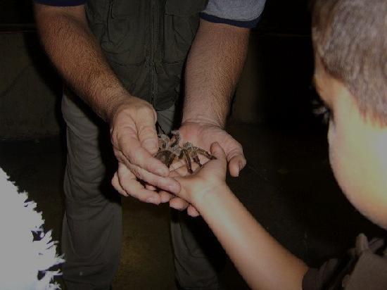 Rainforest Adventures: Holding a Rose hair tarantula during show.
