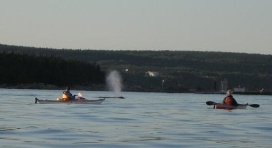 Humpback surfacing about not too far away. Les Escoumins, Quebec.
