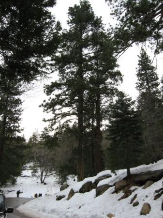 Idyllwild, แคลิฟอร์เนีย: Humber Park-Devil's Slide Trail