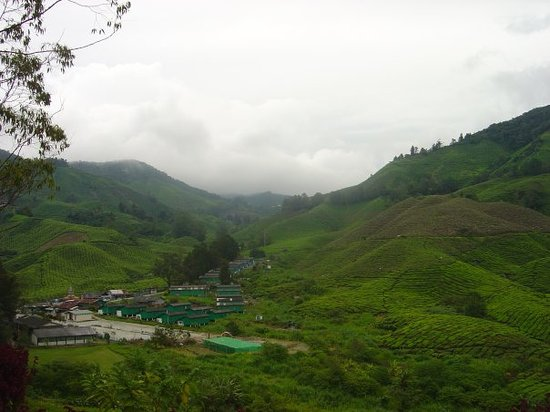 Brinchang, Maleisië: slopes of cameron highlands.