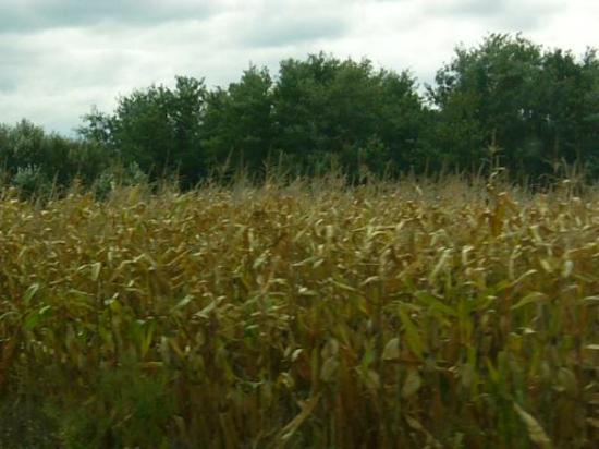 Zalaegerszeg, ฮังการี: fields everywhere you look !