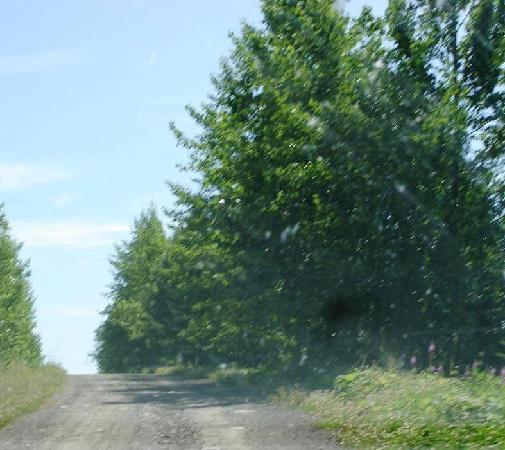Granisle Circle Tour : Babine Lake Road