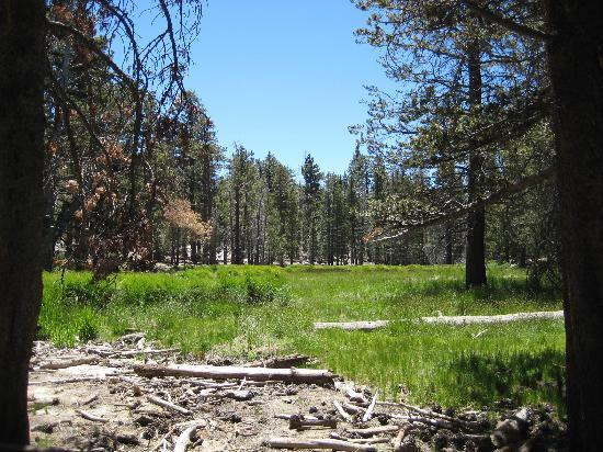 Palm Springs Aerial Tramway: A small meadow on the mountain