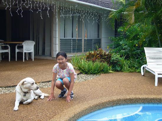 Pillows in Paradise Bed & Breakfast: Pool and dog