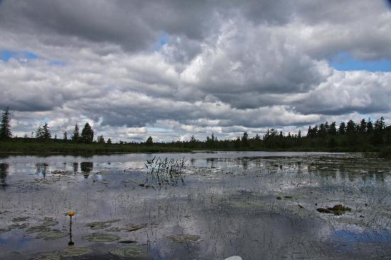 Oxbow, ME: Storm Clouds - Lilly Pads = Moose Bait