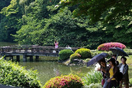 光に輝くカエデの若葉 - Picture of Shinjuku Gyoen National Garden, Shinjuku - TripAdvisor