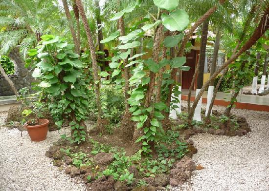 Las Espuelas Hotel: Lush tropical plants