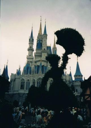 Orlando, FL: Disney, Florida   .... some dozy cow got in the way of the castle!