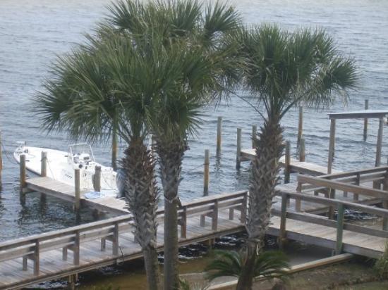 หาดออเรนจ์, อลาบาม่า: The palm trees.