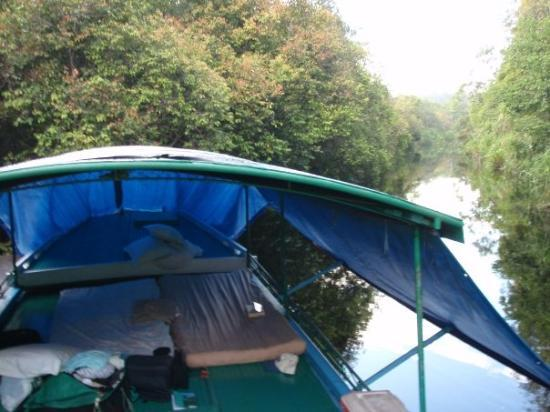 Пангкалан-Бун, Индонезия: This is our bedroom while we lived on the river boat. The jungle was so thick the only place we