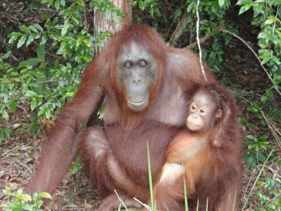 Pangkalan Bun, Indonesië: mother Orang with her baby