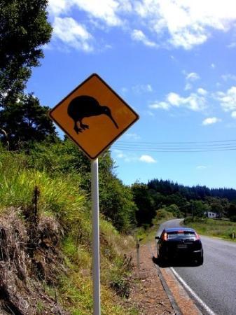 Matamata, นิวซีแลนด์: New Zealand