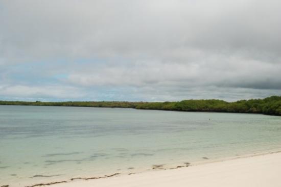 ซันตาครูซ, เอกวาดอร์: Tortuga Bay