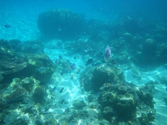 Coral Redang Island Resort: ビーチにも魚がいっぱい