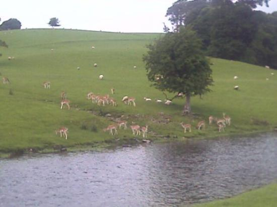 Garstang, UK: Red Deers @ Milnthorpe
