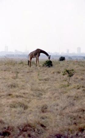 Nairobi National Park ภาพถ่าย