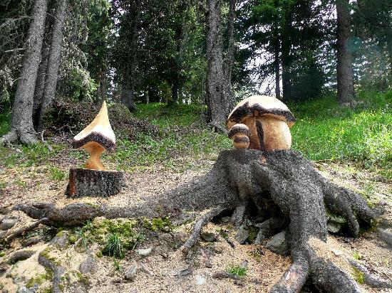 Hotel Sport: funghi artistici nel bosco