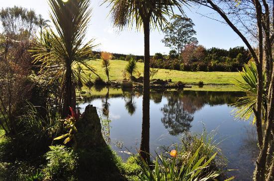 Kaimanga Lodge: The pond 2