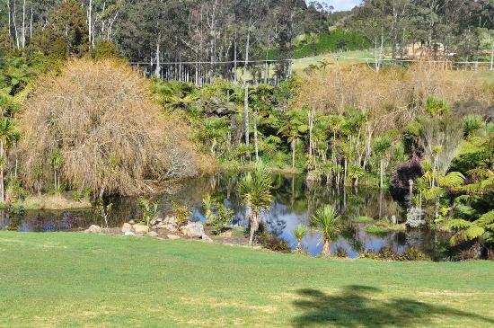 Kaimanga Lodge: The pond 3