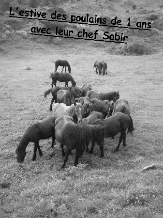 Saint-Girons, Francia: Estive des 1 ans