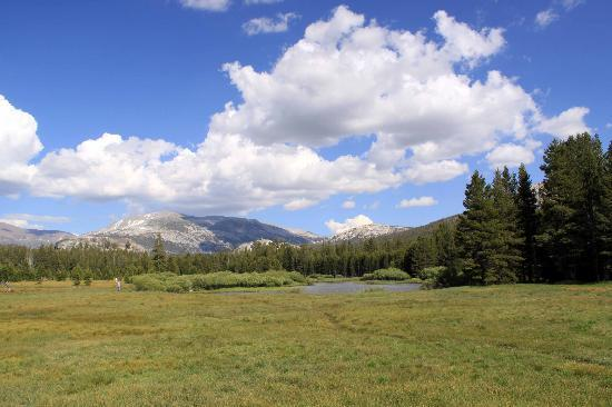 one of many trails in Tuolumne Meadows