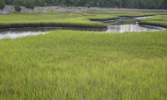 Croatan National Forest: Cedar Point campground salt marshes