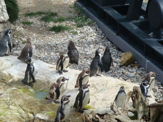 Tiergarten Schoenbrunn - Zoo Vienna : penguins