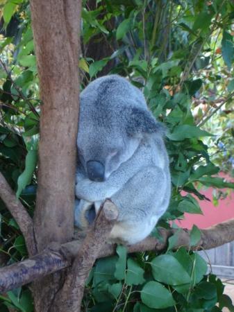 Australia Zoo: Awwwww