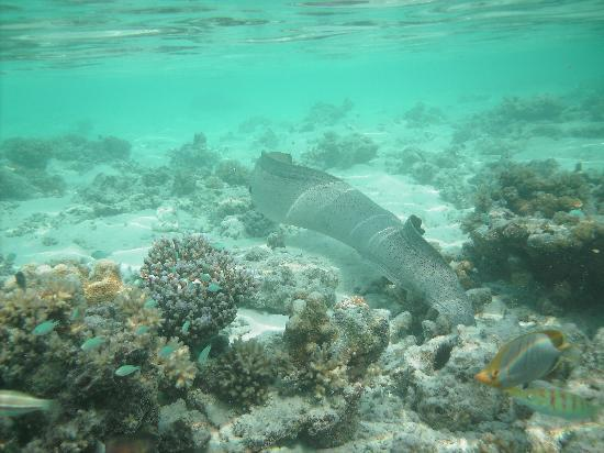 huge moray in the lagoon picture of cinnamon dhonveli. Black Bedroom Furniture Sets. Home Design Ideas
