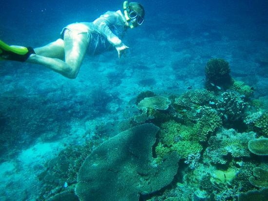 Nakia Resort & Dive: Snorkelling in front of Nakia