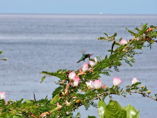 Césped & amp; Cuidado de arbustos por Hummingbird Pest Control en Clermont.