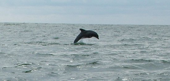 Chincoteague Cruises & Nature Tours: We saw so many dolphins
